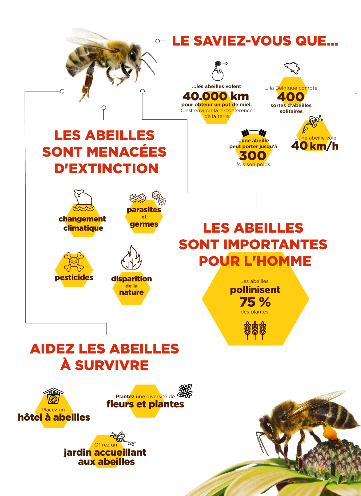 infographic abeille