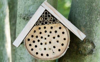 Een heerlijk hotel voor de bijtjes in jouw buurt