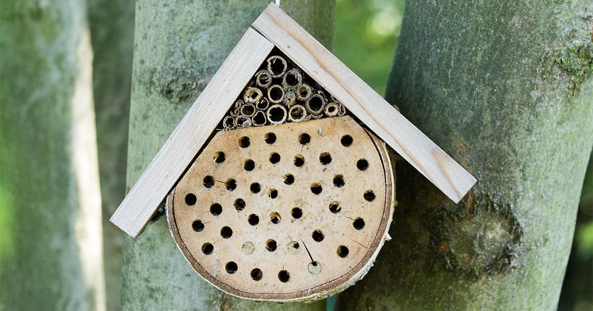 Un agréable hôtel pour les abeilles près de chez vous
